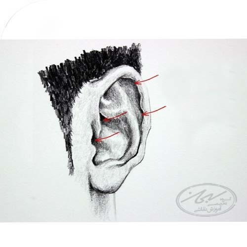 فرایند دو مرحله ای برای ترسیم گوش های واقع بینانه